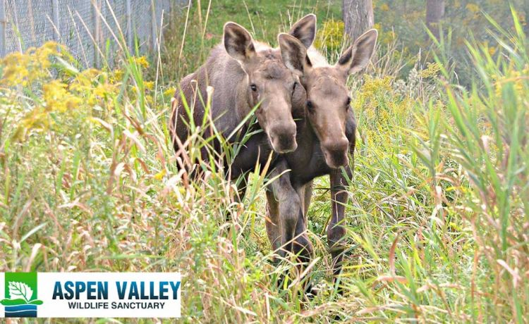 Aspen Valley Wildlife Sanctuary Update