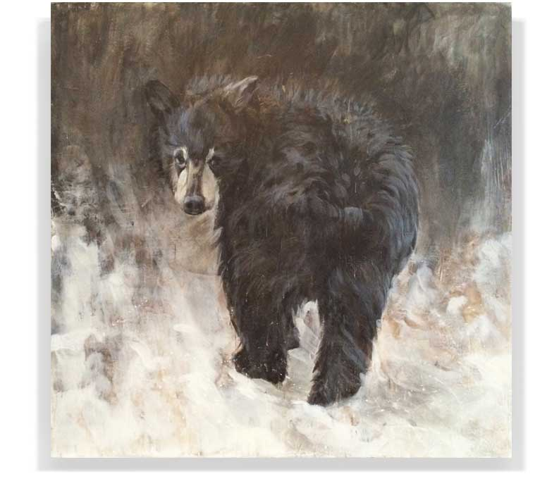 "BEAR CUB 59-01, ENCAUSTIC ON CANVAS ON PANEL, 60"" X 60"""