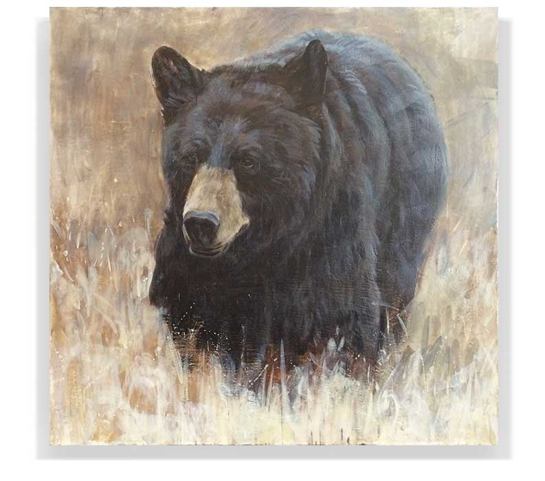 "BLACK BEAR 59-02, ENCAUSTIC ON CANVAS ON PANEL, 60"" X 60"""