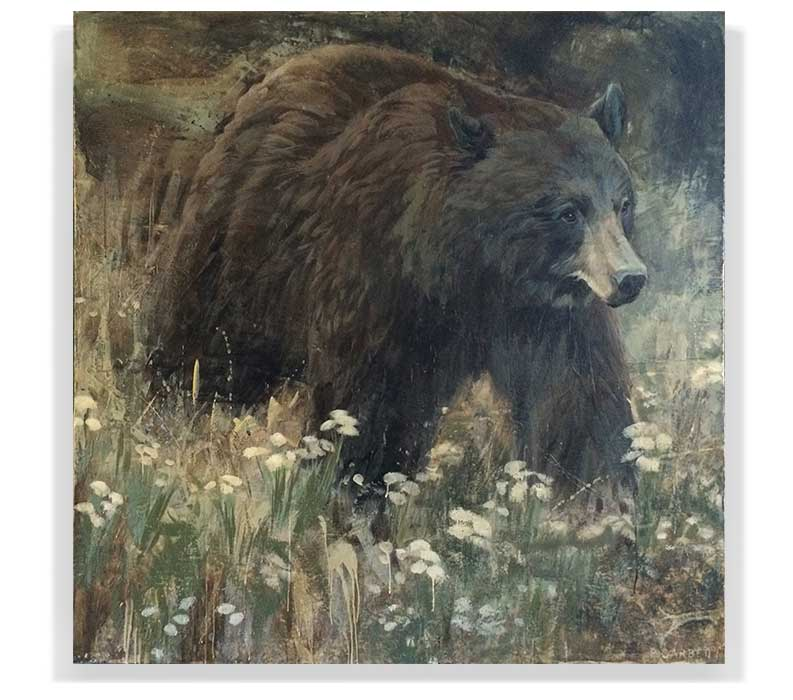 "BLACK BEAR 59-07, ENCAUSTIC ON CANVAS ON PANEL, 60"" X 60"""